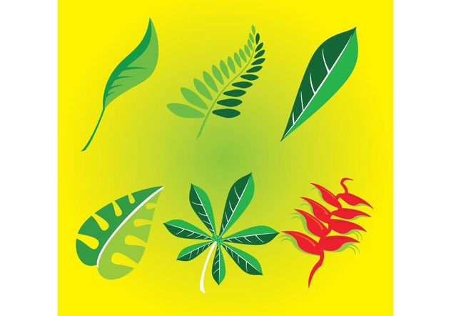 Nature Leafs - vector gratuit #145703