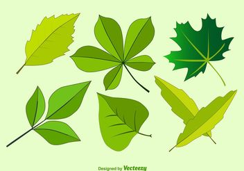 Vector Leaves Illustrations - vector gratuit #145873