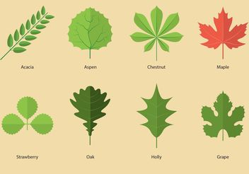 Leaves Vectors - vector gratuit #146023