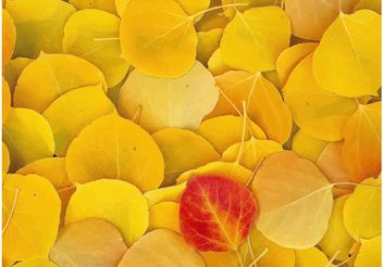 Fallen Leaves Close-Up - vector gratuit #146733