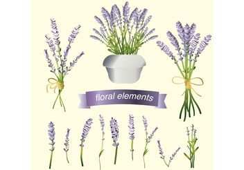 Set of Lavender Flower Vectors - vector gratuit #147433