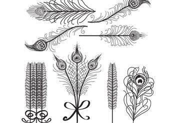 Vector Feathers Birds of Paradise White and Black - vector gratuit #156793
