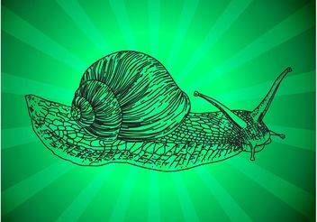 Snail Outline - Free vector #156843