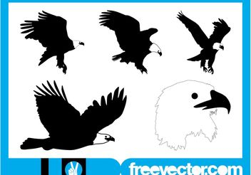 Bald Eagle Graphics - Free vector #157803