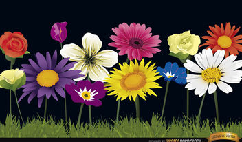 Several flowers on grass background - vector gratuit #164183