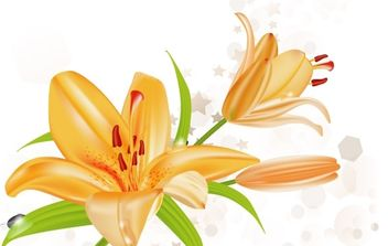 Lily Vector Illustration - Free vector #169013