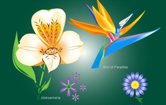 Blume-Pack mit Bird Of Paradise - Kostenloses vector #172013