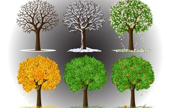 Tree in Seasons View - vector gratuit #174223
