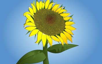 Photorealistic Sunflower Vector - Kostenloses vector #174383