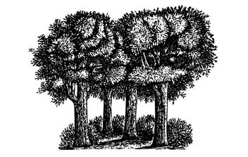 Group Of Trees clip art - Free vector #176453