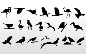 Birds Collection - vector gratuit #179433