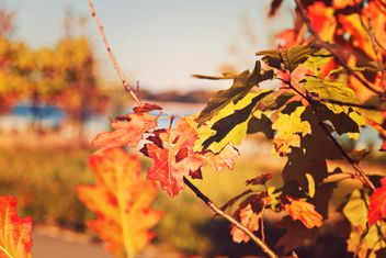 #autumncity #autumn #orange #nature - Kostenloses image #182883
