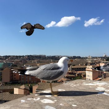 seagulls on roof - image gratuit #183093