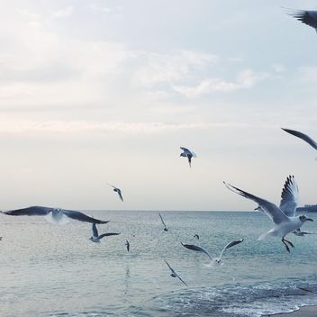 Seagulls flying over sea - image #183323 gratis
