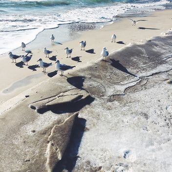 Seagulls on seashore in sunny day - image #183553 gratis