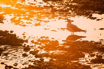 Seagull at sunset - Free image #183963