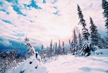 Fir trees in winter - image #184023 gratis