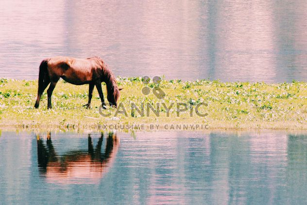 Brown horse grazing on shore of river - image gratuit #184043