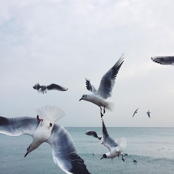 Gulls in flight by the sea - image #184123 gratis