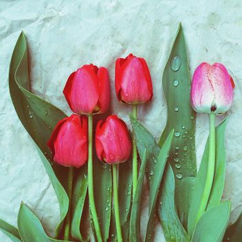 Five tulips - image #184423 gratis