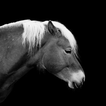 Horse on black background - бесплатный image #184513