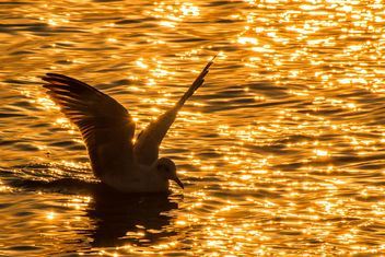 SEagull on water - image #184653 gratis