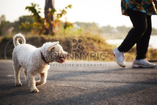 White dog in street with its owner - image #186093 gratis