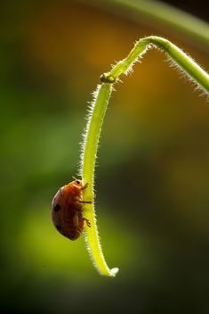 Ladybug on green twig - image #186123 gratis