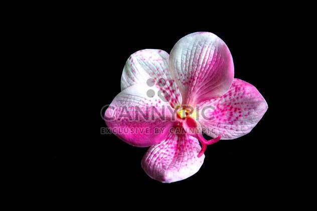 Pink orchid flower - Free image #186183