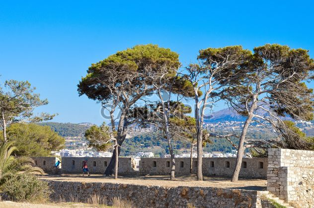 Trees under blue sky - Free image #186263