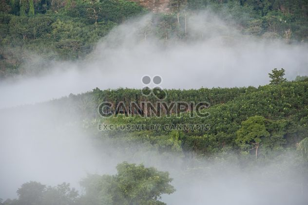 #fog #morning #forest #trees #flow #nature #view #weather #refreshing #travel #leisure# - Free image #186313