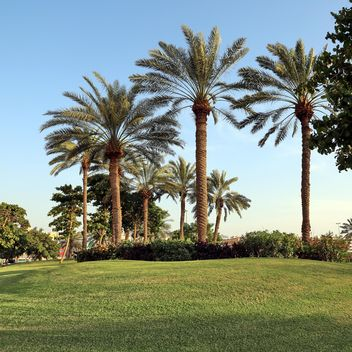 Palm trees under blue sky - image #186683 gratis