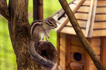 Cute chipmunk in zoo - image #186773 gratis