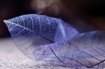 Dry purple leaves - image gratuit #198213