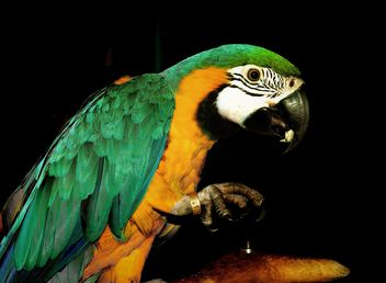 Portrait of macaw parrot - Kostenloses image #198223