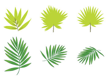 Free Palm Leaf Vectors - бесплатный vector #199493
