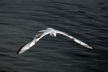 Seagull flying over sea - image #201433 gratis