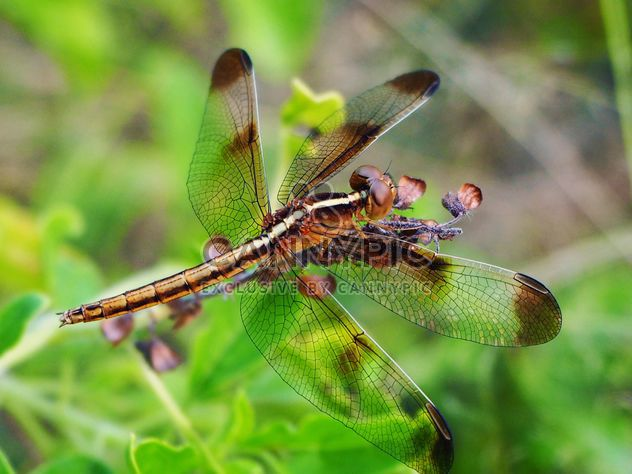 Dragonfly on the herb - Free image #201503