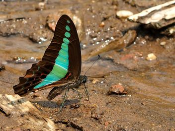 Black-blue butterfly - бесплатный image #201553