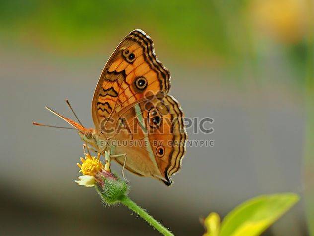 papillon orange - image gratuit #201563