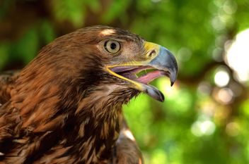 Close-Up Portrait Of Eagle - image gratuit #201653