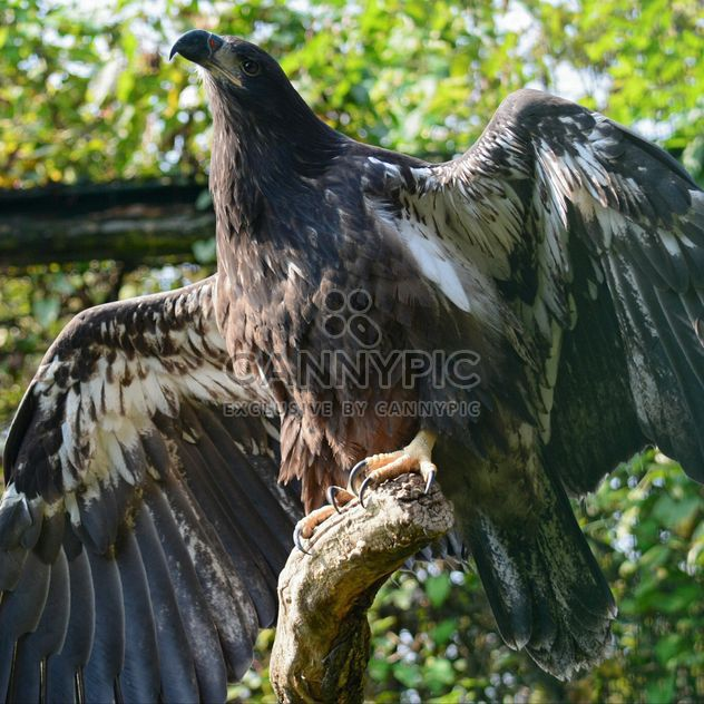 Close-Up Portrait Of Eagle - image #201683 gratis