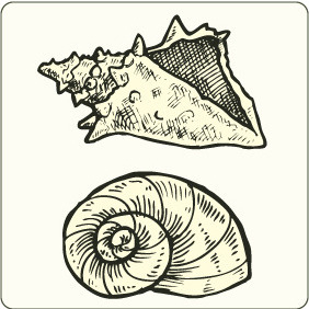 Sea Shells - vector gratuit #208123
