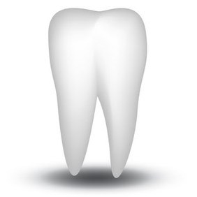 Vector White Tooth - Free vector #213953