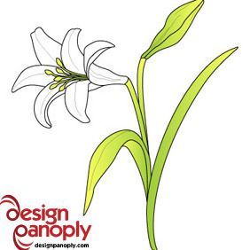 Free Easter Lily Vector Flower - Kostenloses vector #216233