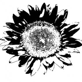 Sunflowers - vector gratuit #223483