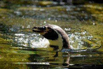Penguin in The Zoo - image #225323 gratis