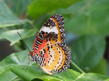 Butterfly close-up - Free image #225373