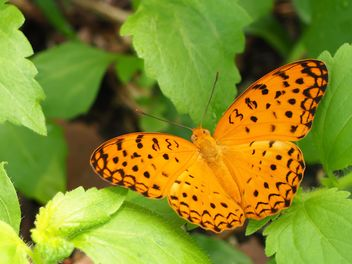 Butterfly close-up - image #225383 gratis