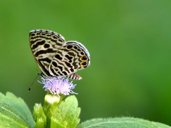Butterfly close-up - image gratuit #225393